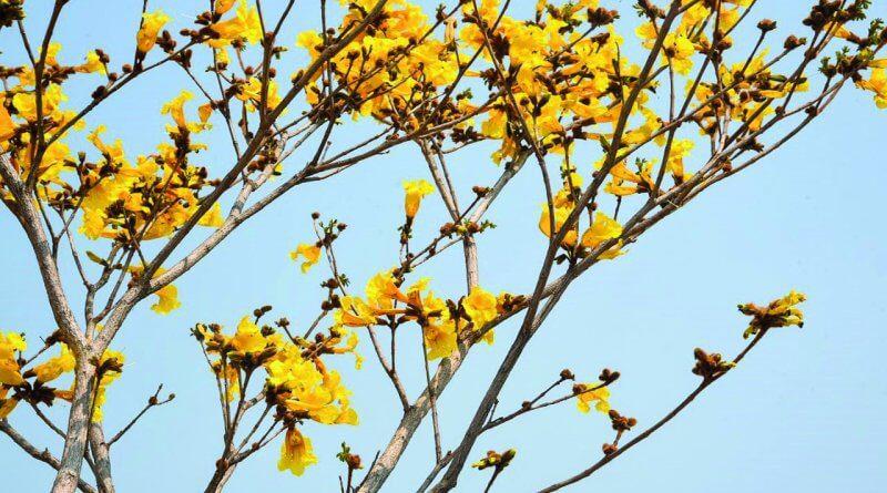 Meio Ambiente: Prefeito Zé amplia projeto Espaço Árvore para novos pontos do município